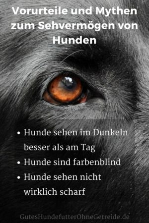 Vorurteile und Mythen wie Hunde sehen
