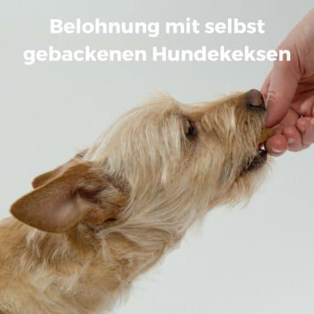 Belohnung mit selbst gebackenen Hundekeksen