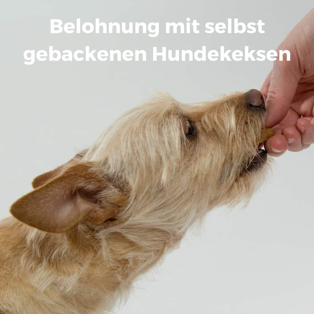 Hundekekse Selber Backen 6 Tolle Rezepte Ohne Getreide