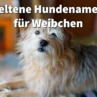 21 seltene Hundenamen für Weibchen, mit Bedeutung und Geschichte des Namens