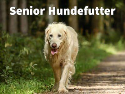Senior Hundefutter: Ab wann Ernährung alter Hunde umstellen?