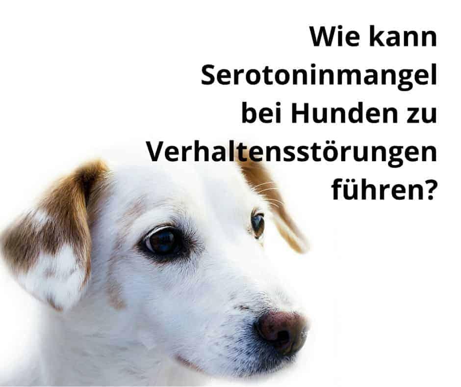 Wie kann Serotoninmangel bei Hunden zu Verhaltensstörungen führen?