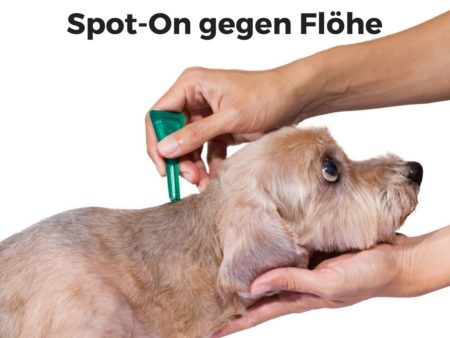 Spot-on Präparate gegen Flöhe