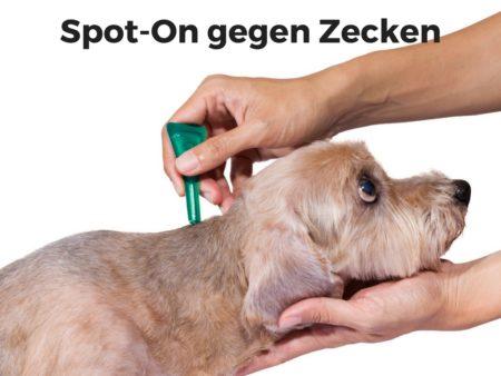 Spot-On-Präparate helfen gegen Zecken beim Hund