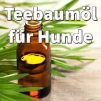 Teebaumöl für Hunde