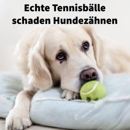 Echte Tennisbälle schaden Hundezähnen