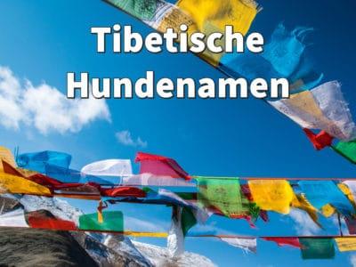 Tibetische Hundenamen mit Bedeutung: weibliche und männliche Namen