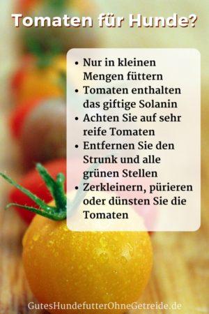So sind Tomaten für Hunde verträglich