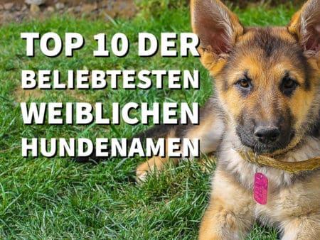 Top 10 der beliebtesten weiblichen Hundenamen