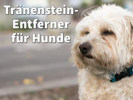 Tränenstein-Entferner für Hunde