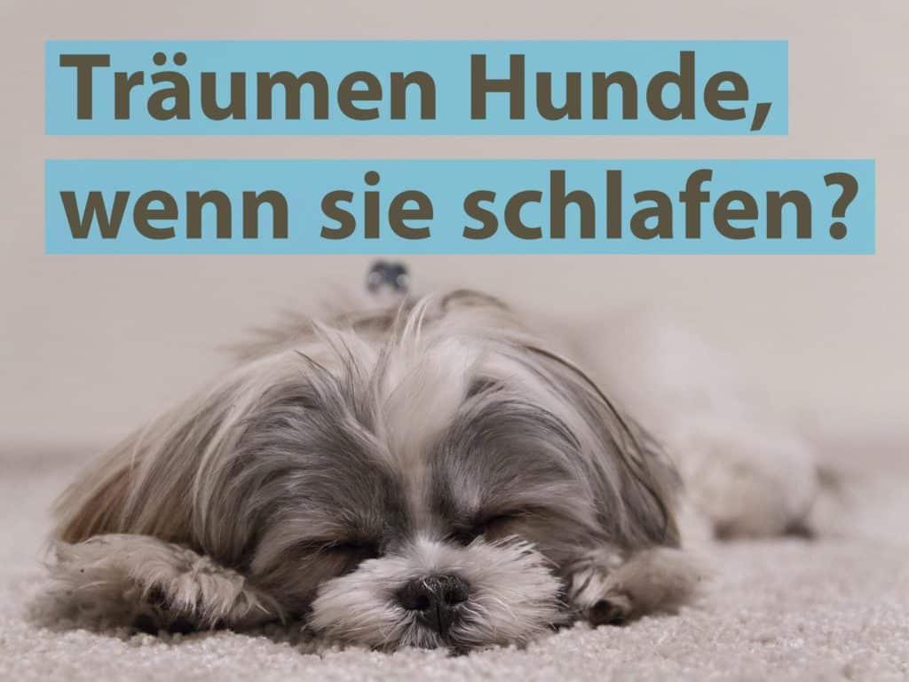 Träumen Hunde, wenn sie schlafen?