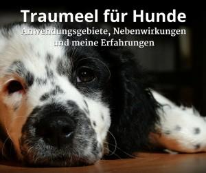 Traumeel für Hunde, Anwendungsgebiete und meine Erfahrungen