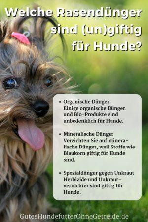 Welcher Rasendünger ist für Hunde giftig? Organisch oder mineralisch düngen