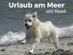 Urlaub am Meer, zusammen mit dem Hund