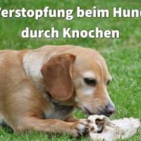Verstopfung beim Hund durch Knochen: Was tun bei Knochenkot und wie behandeln?