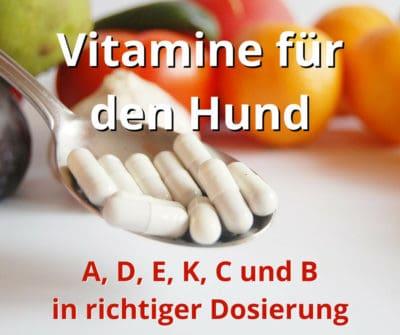 Vitamine für Hunde: 6 Vitamine in der richtigen Dosierung