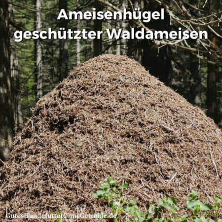 Hügel geschützter Waldameisen