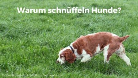Warum schnüffeln Hunde?