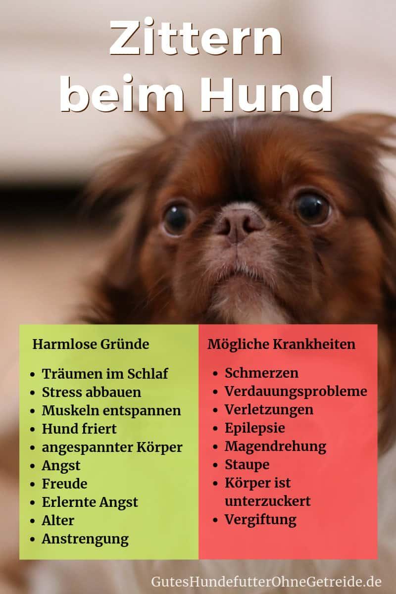 Impfreaktion Hund Zittern