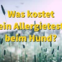 Was kostet ein Allergietest beim Hund?