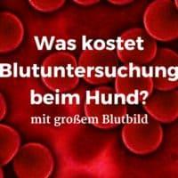 Was kostet Blutuntersuchung mit großem Blutbild beim Hund?