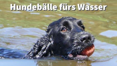 Welcher Hundeball schwimmt im Wasser?
