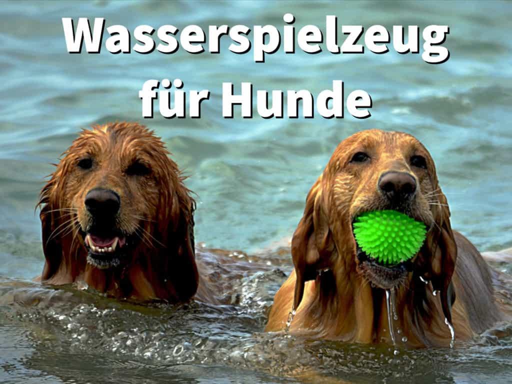 Wasserspielzeug für Hunde: schwimmendes Spielzeug fürs Wasser