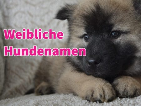 Weibliche Hundenamen: 73 coole, ausgefallene und beliebte Namen für Hündinnen