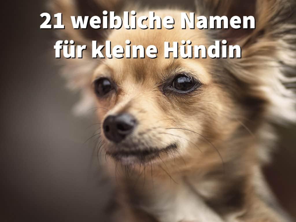 21 weibliche Hundenamen für kleine Hündinnen