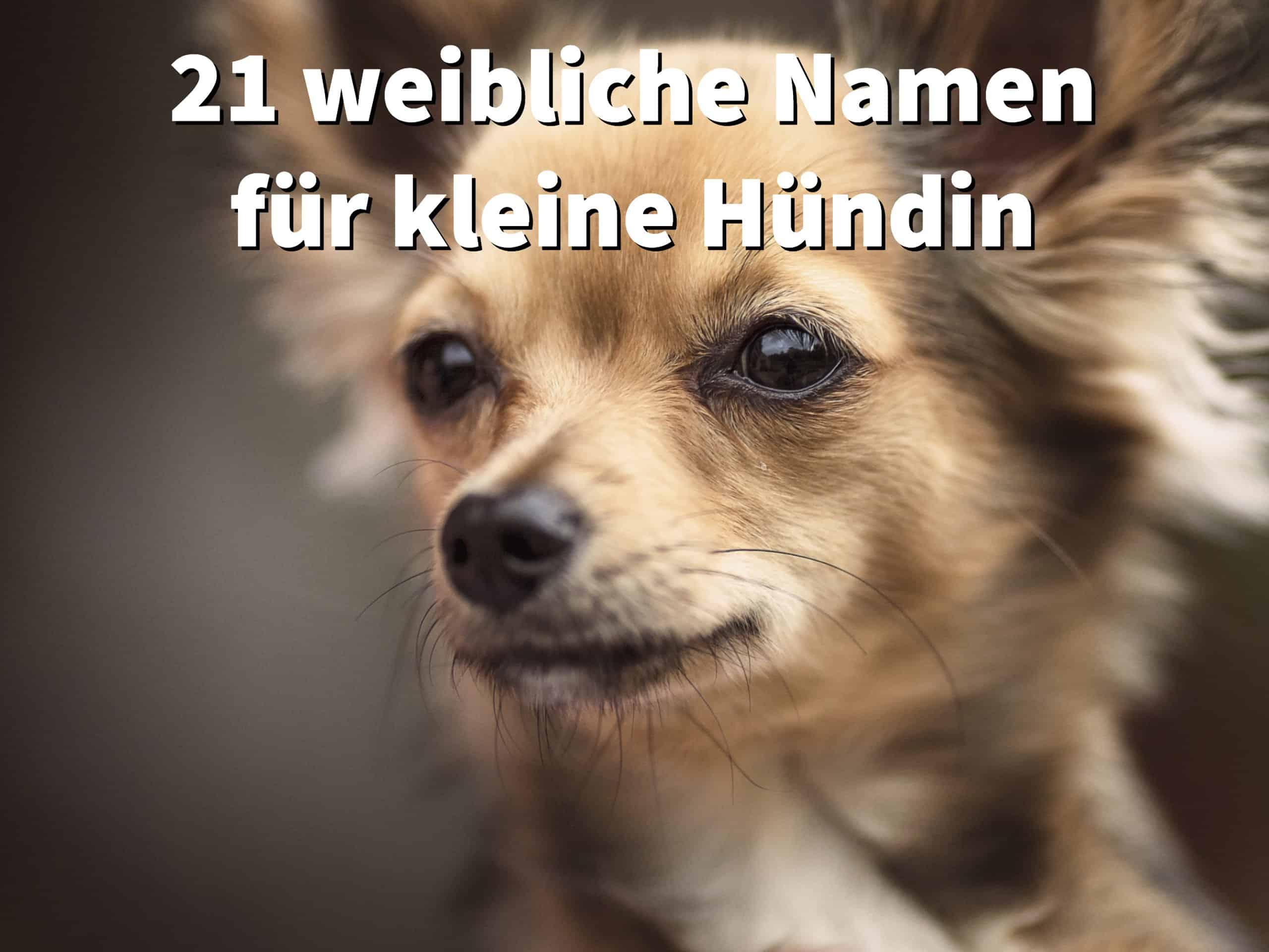 21 seltene Hundenamen für Weibchen, mit Bedeutung und