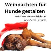 Weihnachten für Hunde gestalten, zwischen Weihnachtsbaum und Adventsmarkt