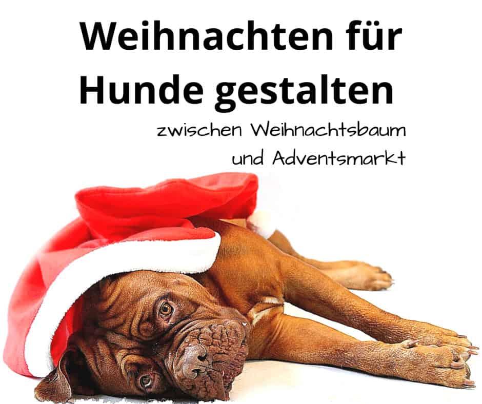 Weihnachten Für Hunde Gestalten Zwischen Weihnachtsbaum Und