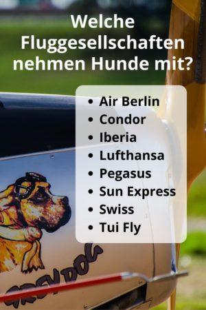 Welche Fluggesellschaften nehmen Hunde mit?