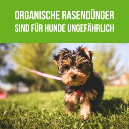 Organische Rasendünger sind für Hunde ungefährlich