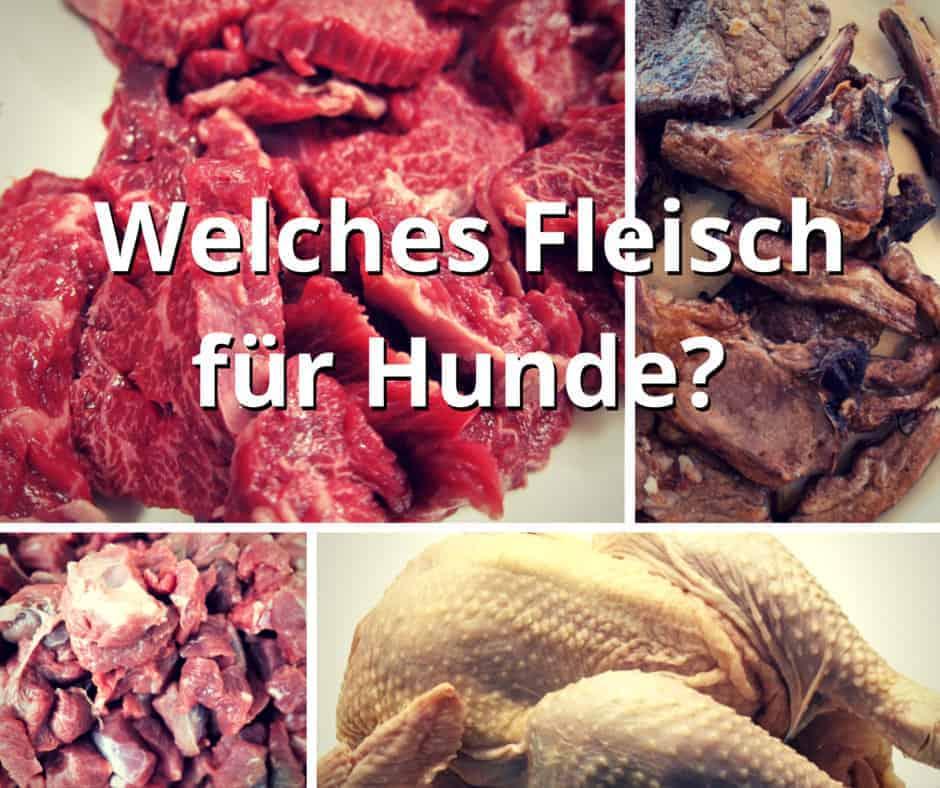 Welches Fleisch für Hunde? Rind, Geflügel, Lamm, Pferd bis Fisch