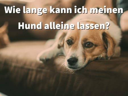 Wie lange kann ich meinen Hund alleine lassen?