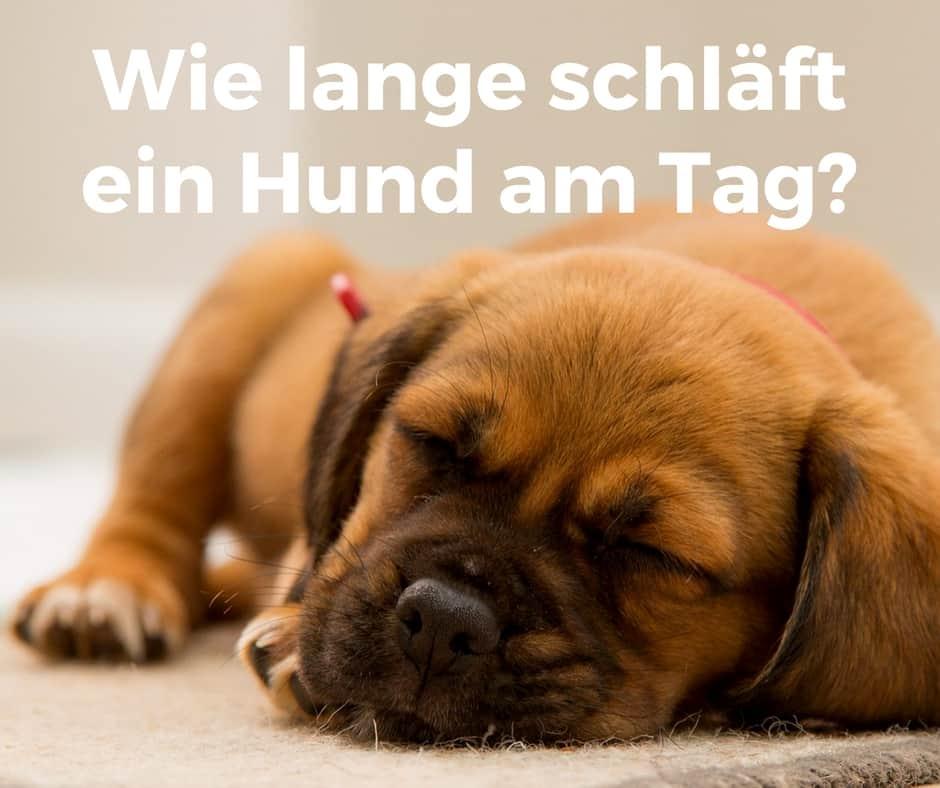 Wie lange schläft ein Hund am Tag?