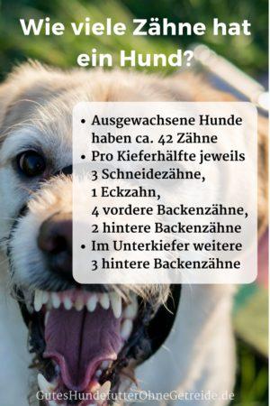 Wie viele Zähne hat ein Hund?