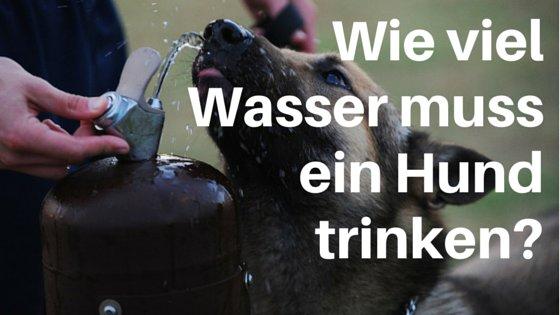Wie viel muss ein Hund trinken? Flüssigkeit ist lebensnotwendig