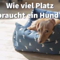 Wie viel Platz braucht ein Hund?