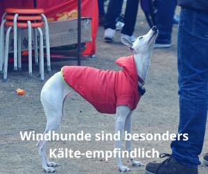 Nackthunde wie der Rhodesien Ridgeback und Windhunde vertragen keine niedrigen Temperaturen.