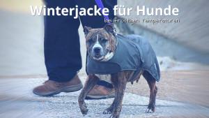 Winterjacke für Hunde