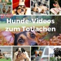 Witzige Hunde-Videos zum Totlachen