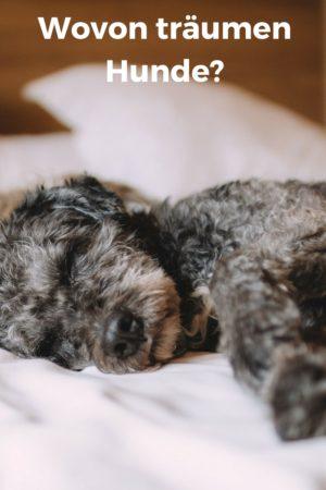 Wovon träumen Hunde wohl?