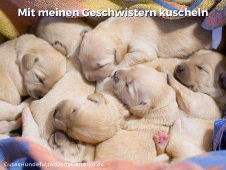 Neugeborene Hundewelpen kuscheln sich eng aneinander