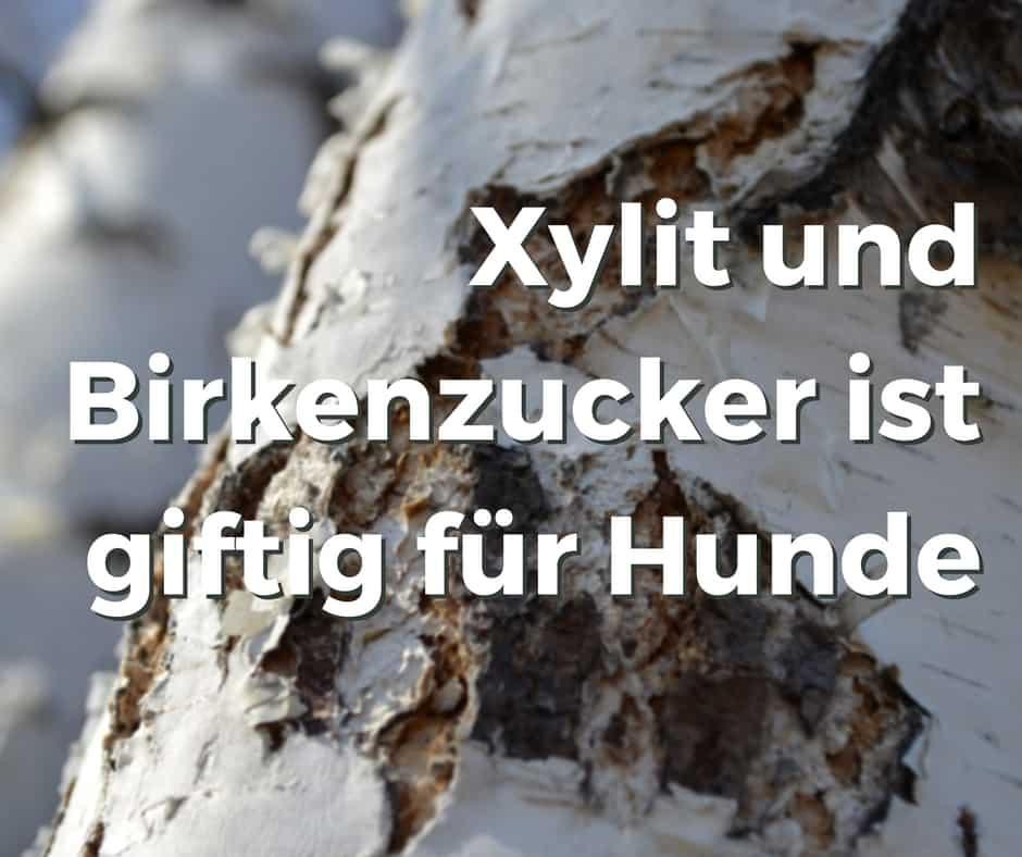 Xylit und Birkenzucker ist giftig für Hunde