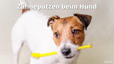 Zähneputzen beim Hund mit Hundezahnbürste