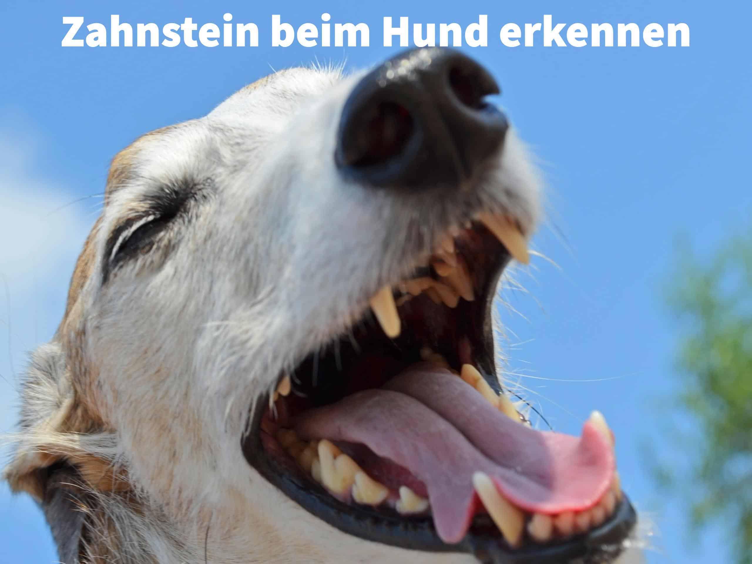 Wie Zahnstein Beim Hund Entfernen Professionelle Zahnreinigung Ohne