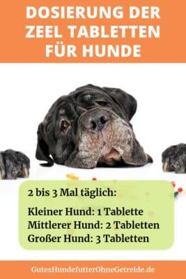 Dosierung der Zeel Tabletten für Hunde
