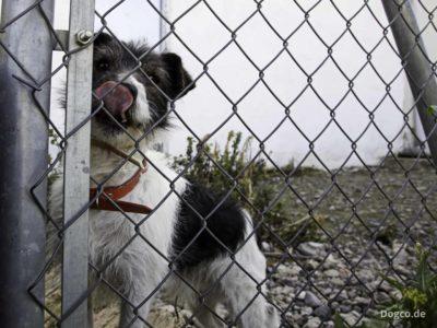 Hund hinter dem Zaun einer Hundepension